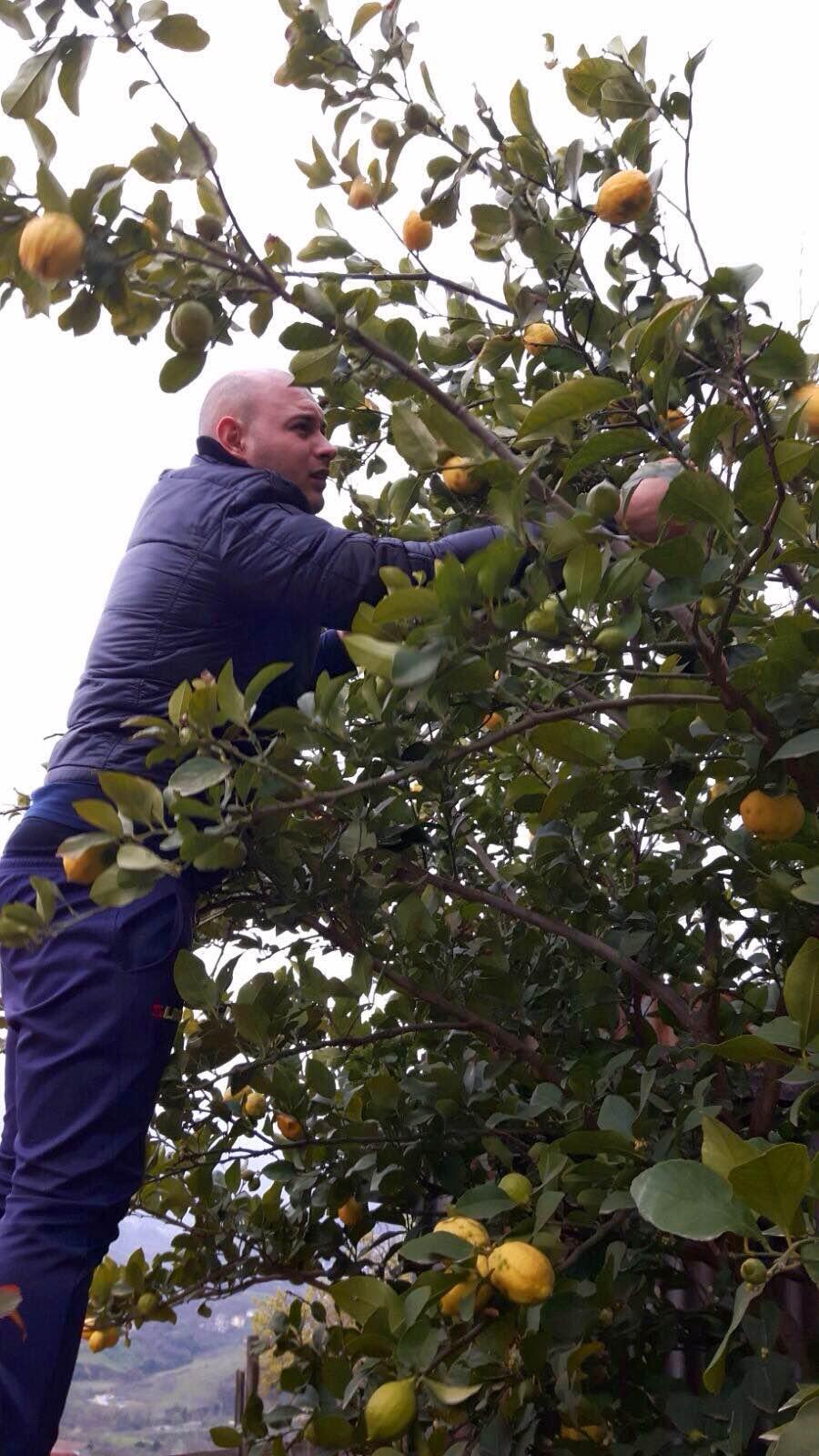 Giovanni picking the lemons from Paulo & Irene's garden