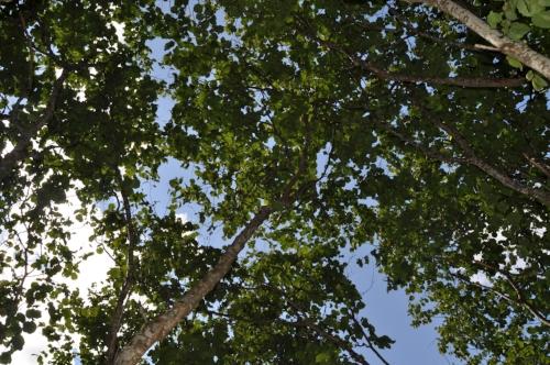 Lund:—Et lysthus formet av trær har de også i Botanisk hage i Trondheim, sier Stephen Barstow.