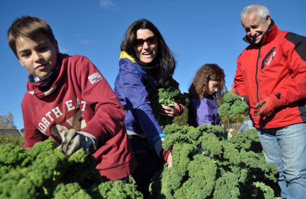 Familiedag:  Leo (12), Agnethe, Claudia (10) Tellefsen og Santi Puente storkoser seg når de besøker Økolandsbyen. Med en andel i landbruket får de høste ferske, økologiske grønnsaker.