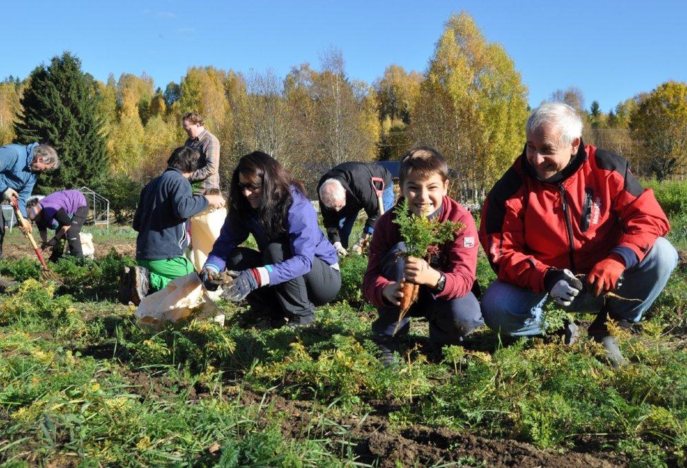 Stas:  Leo Tellefsen (12) synes det er helt topp å rive grønnsaker opp fra jorda.
