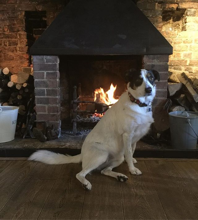 We're not the only ones who love the fire! 🐶🔥