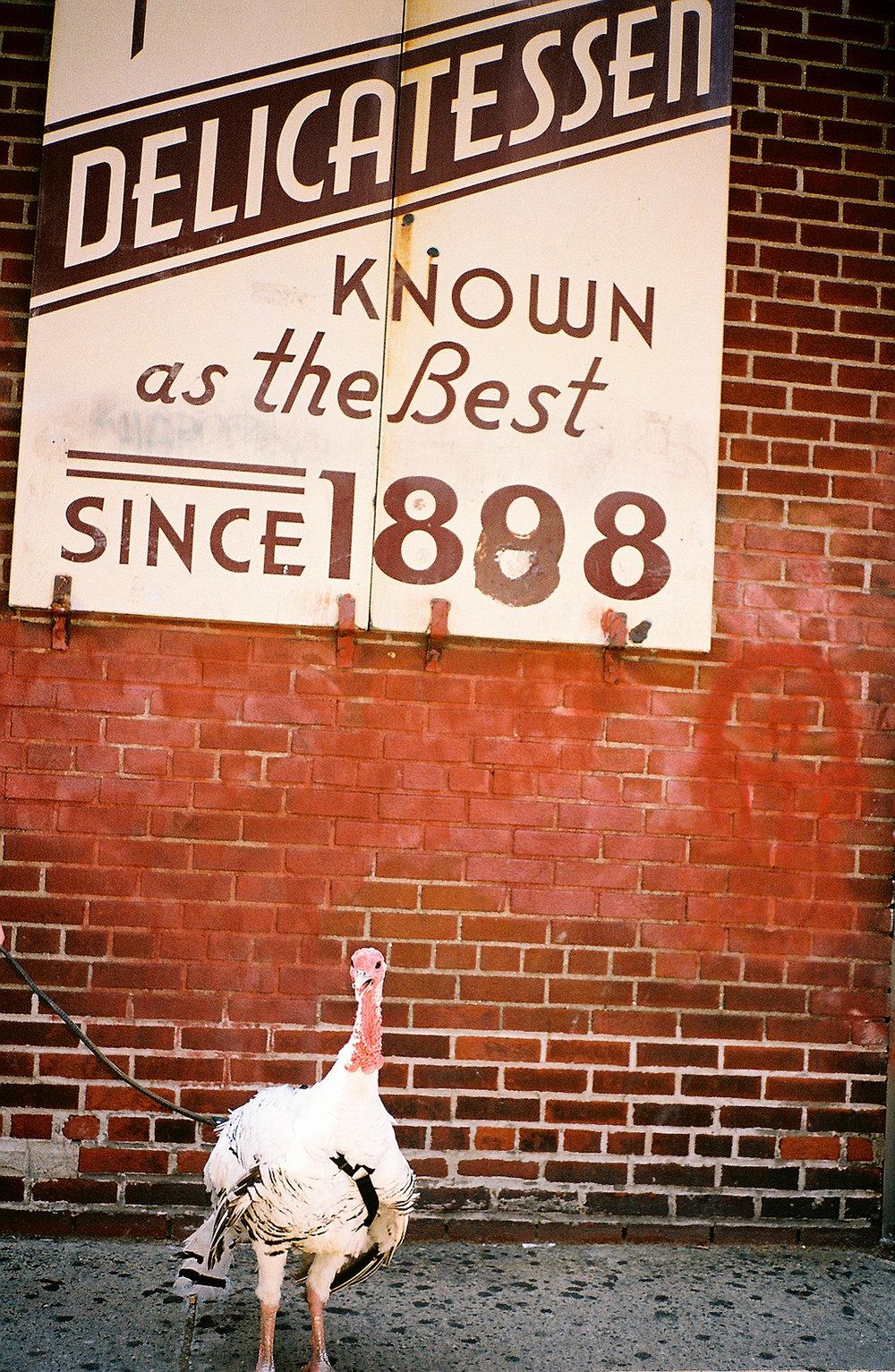 Henry the turkey outside of Katz's.jpg