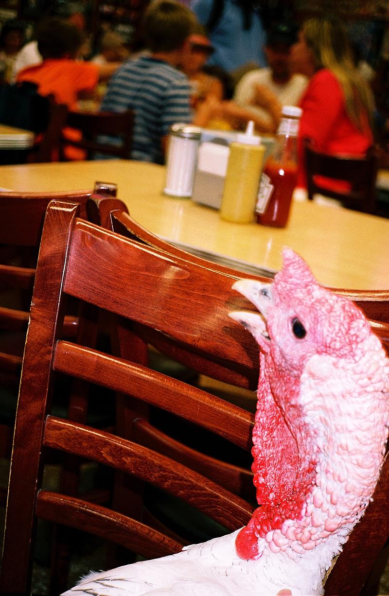 Turkey at Katz's 2.jpg