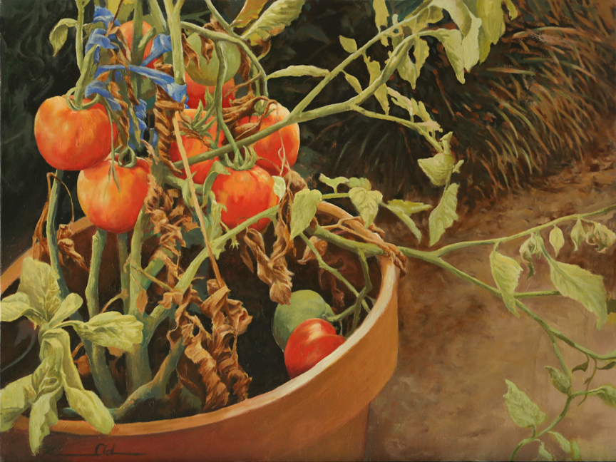 Mom's Tomatoes   18 x 24   Oil on Canvas (SOLD)