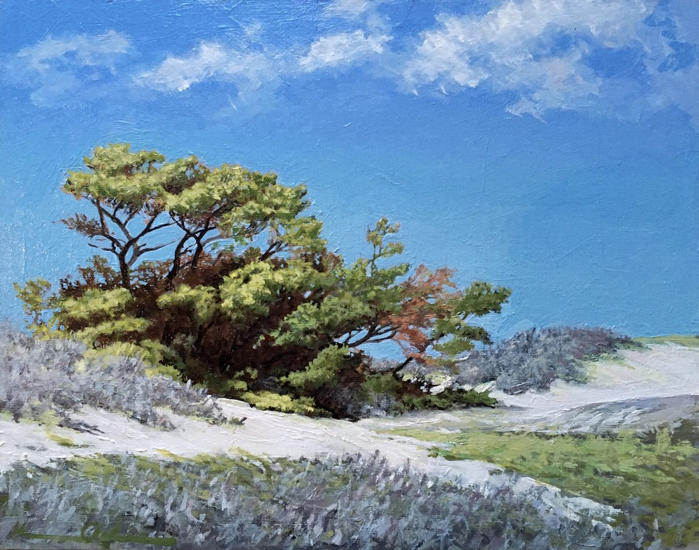 Dunes and Pitch Pines 11 X 14 oil on canvas sold