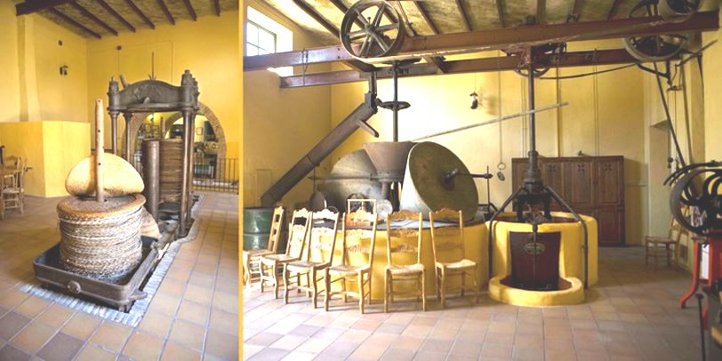 Interior of Oro del Desierto - Number 1 organic extra virgin olive oil in the world!