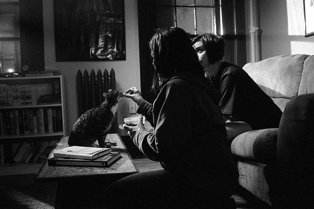 feeding  cat.jpg