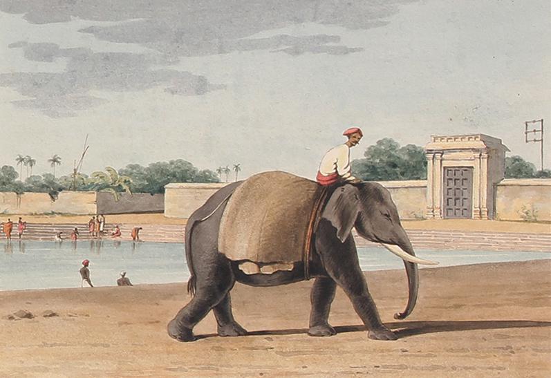John Gantz | An Elephant by the River, Madras