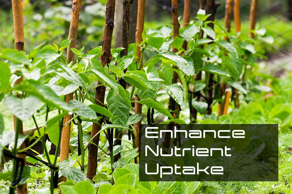 Enhance Nutrient Uptake.jpg