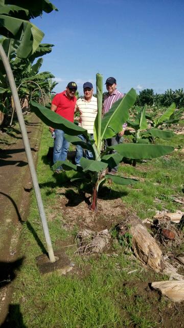Banna Farm.png