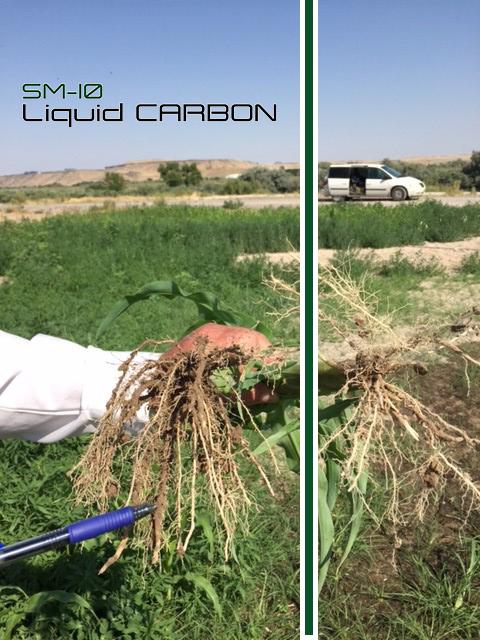 SM-10 Corn Trials Root Biology (LEFT).jpg