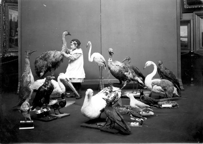 From the Tyne & Wear Archives & Museums. Caption: A Girl 'Seeing' (1913). Here is a young girl who is blind - examining mounted birds at Sunderland Museum and Winter Gardens. Charlton Deas, curator at Sunderland Museum was a pioneer in making museums accessible to disabled people, especially blind/visually impaired people. In 1913 he organised a number of handling sessions for both blind adults and children. Ref: TWCMS:K13593_2