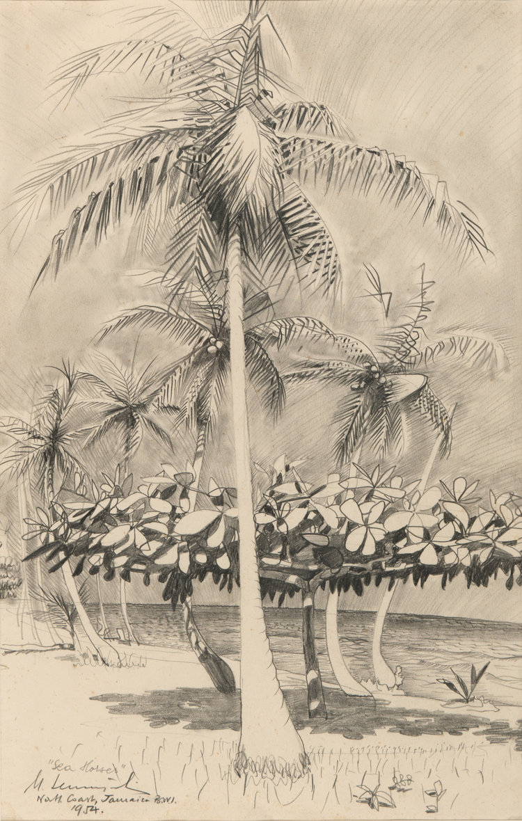 """Sea Horses"", North Coast Jamaica"