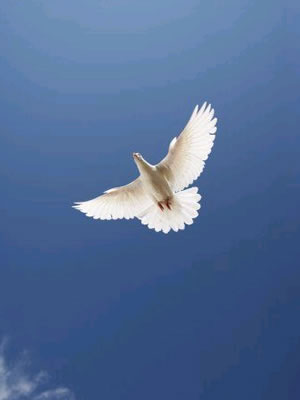 holy spirit dove.jpg