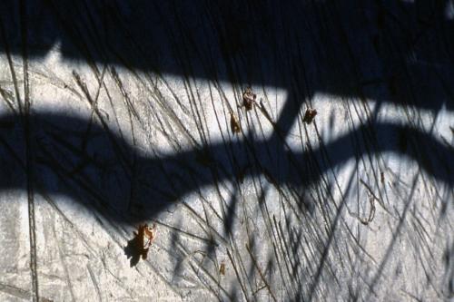 Bulrush paving texture in lower park  (detail)