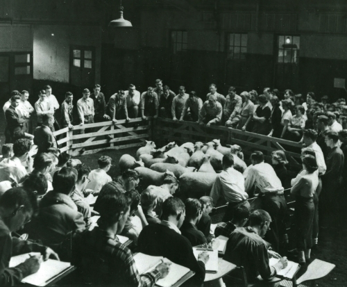 OSU animal sciences classroom , circa 1963