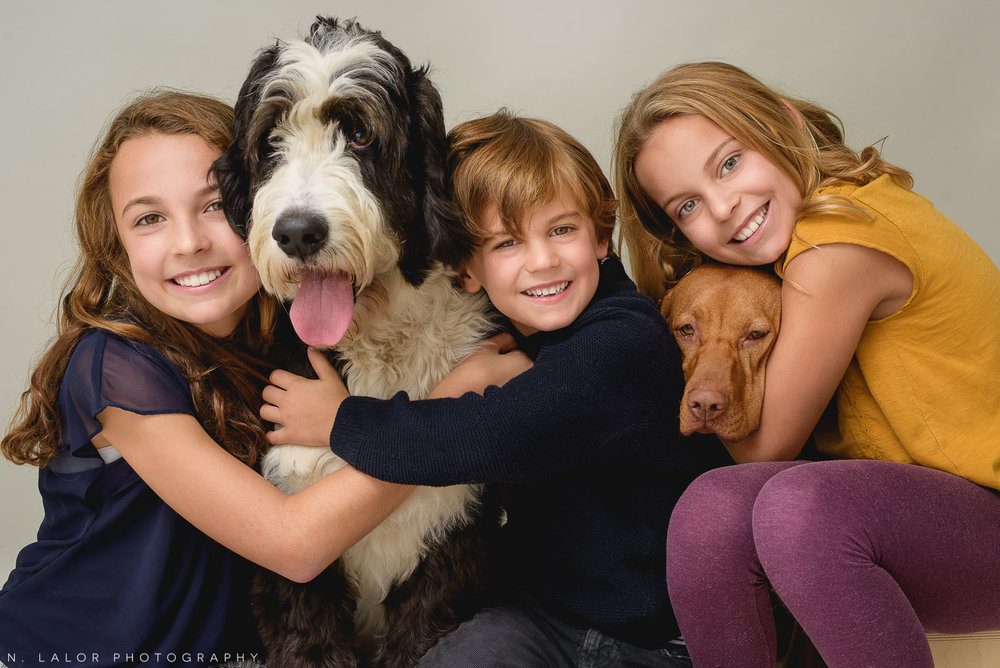 Image of three children with two dogs. Portrait by N. Lalor Photography, Studio located in Greenwich Connecticut.