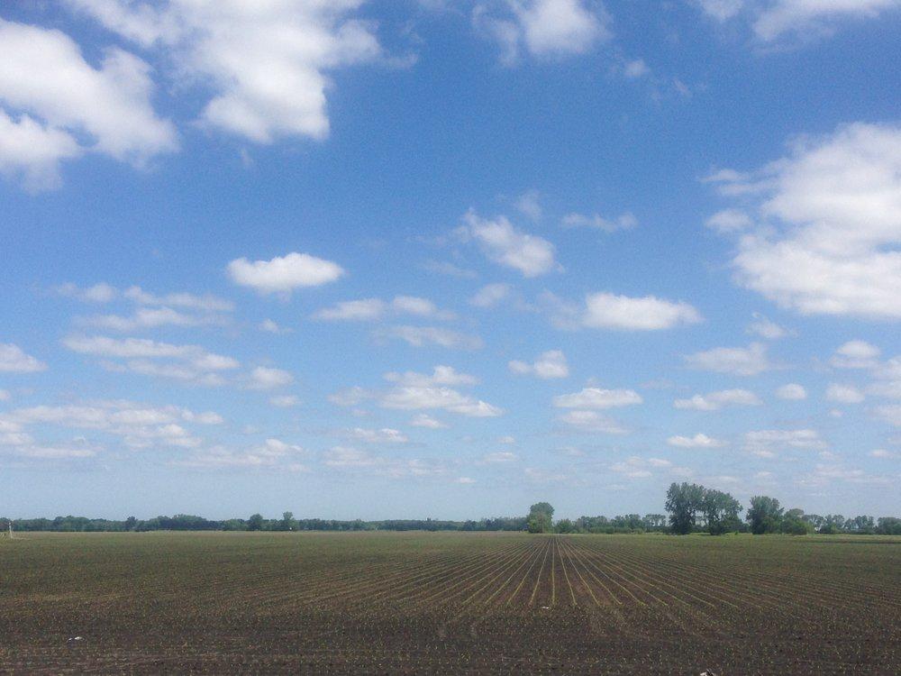 corn emerging.JPG