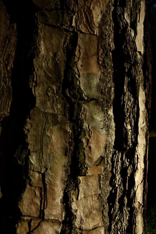 2 ChiaroScuro - Skins.jpg