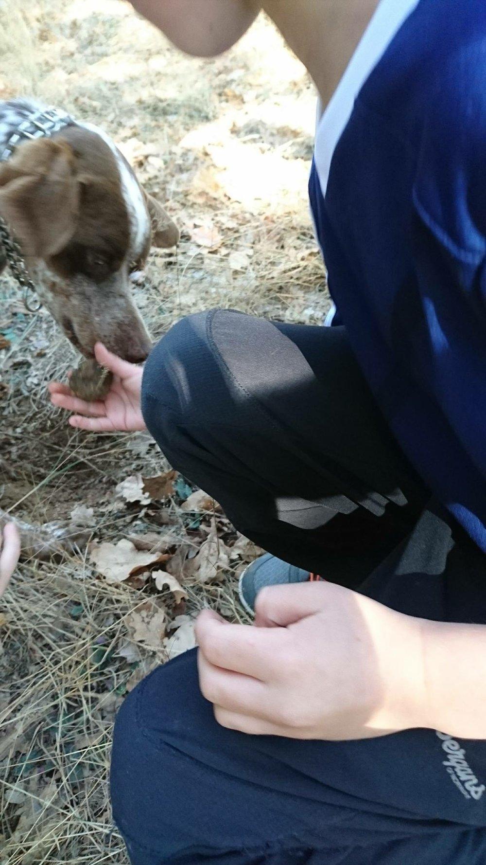 Program for tre generasjoner på høstferie (her på trøffeljakt)