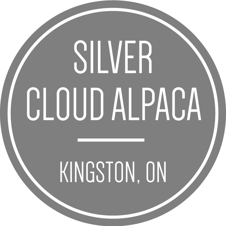 SilverCloudAlpaca