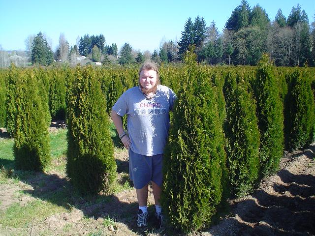 Emerald Green Arborvitae   Thuja Occidentalis Smaragd  Erik standing next to some arborvitae back in 2005.