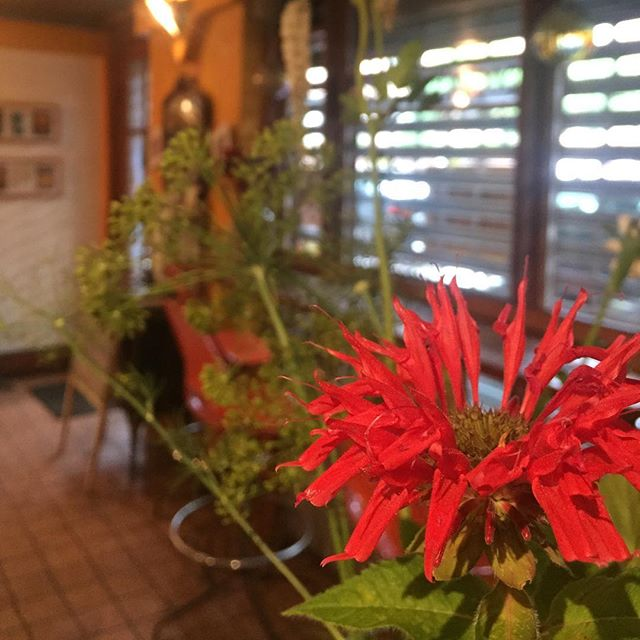 A little bee balm to excuse our absence today. The rainy weekend threw a wrench in our grilling and smoking plans. We will be back in full swing tomorrow all a buzz with delicious treats and stories from our vacation.  #reopen #vacation #backinthestuy #bedstuy #doctorscavecafé #dcc #foodisamood