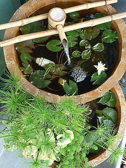 Indoor #ponds are a great way to bring #ritual into your days