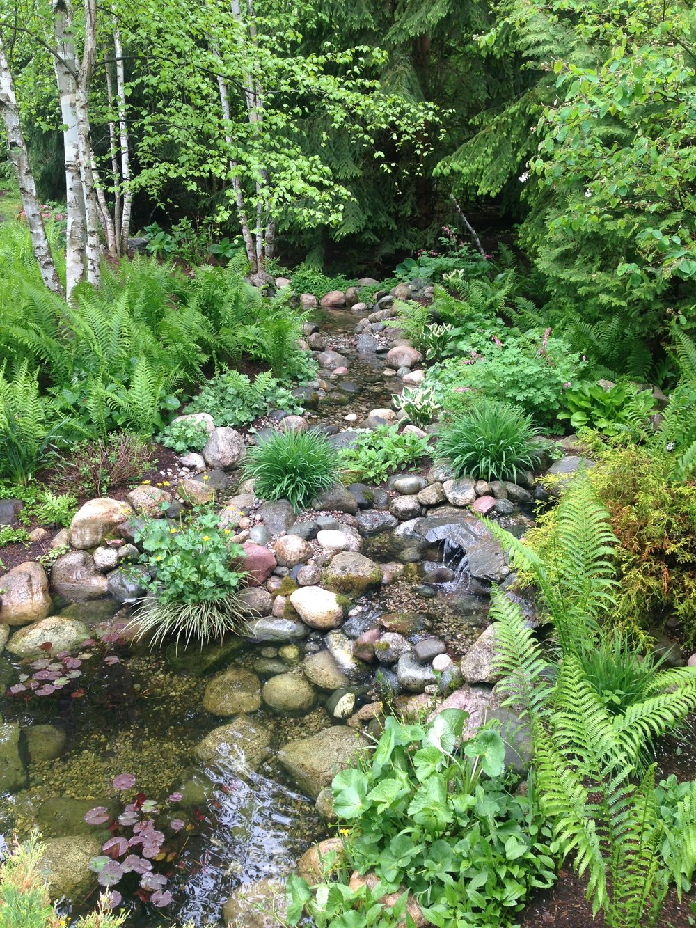 A meandering stream flowing into a pond all filtered by plants and fish.
