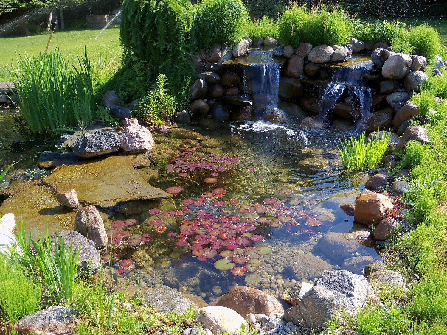 torch lake pond waterpaw outdoor oasis specialist
