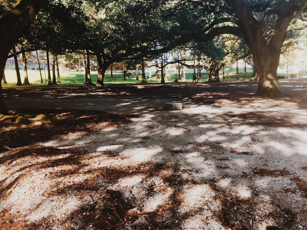 The Enchanted Forest (LSU Campus) today, 11/19