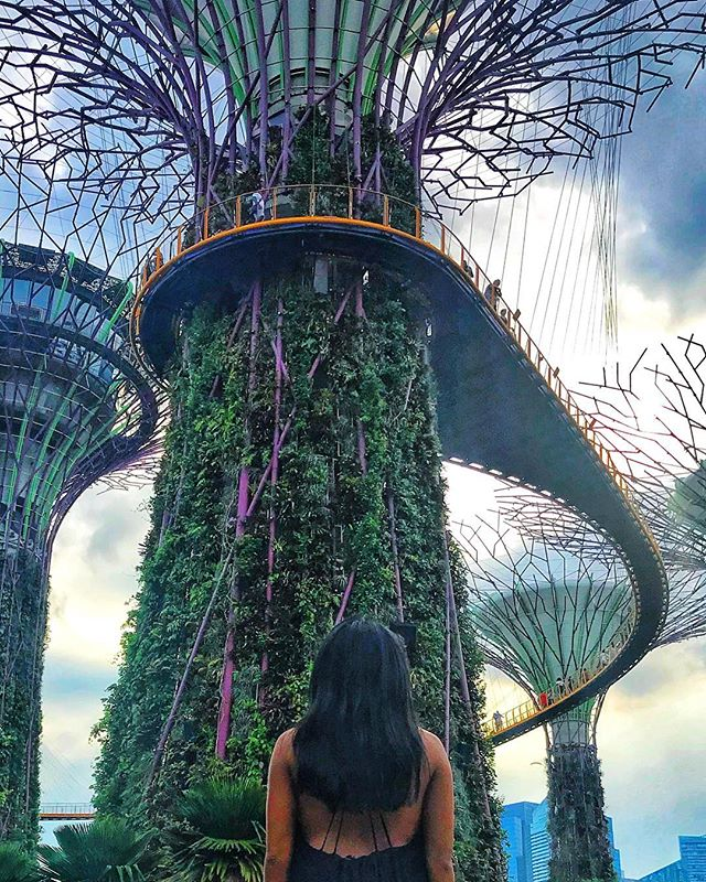 ⬇️ Gardens by the Bay from Below ⬇️