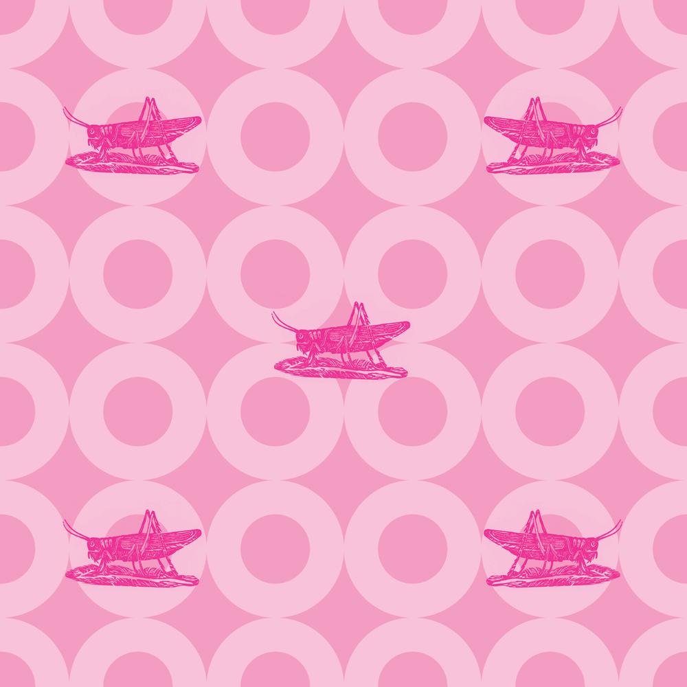 MACCHIO-raspberry.jpg