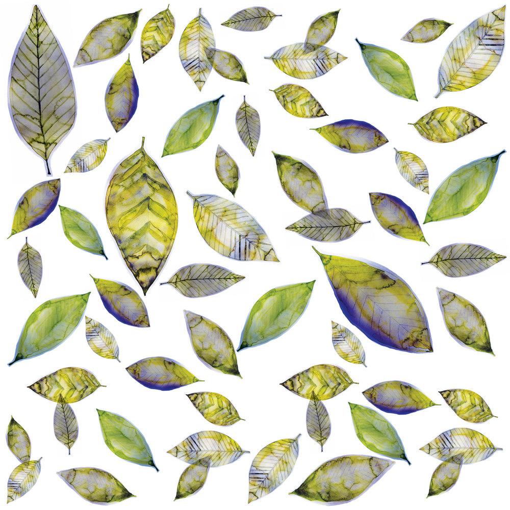 LEIF-olive-revised-91715.jpg