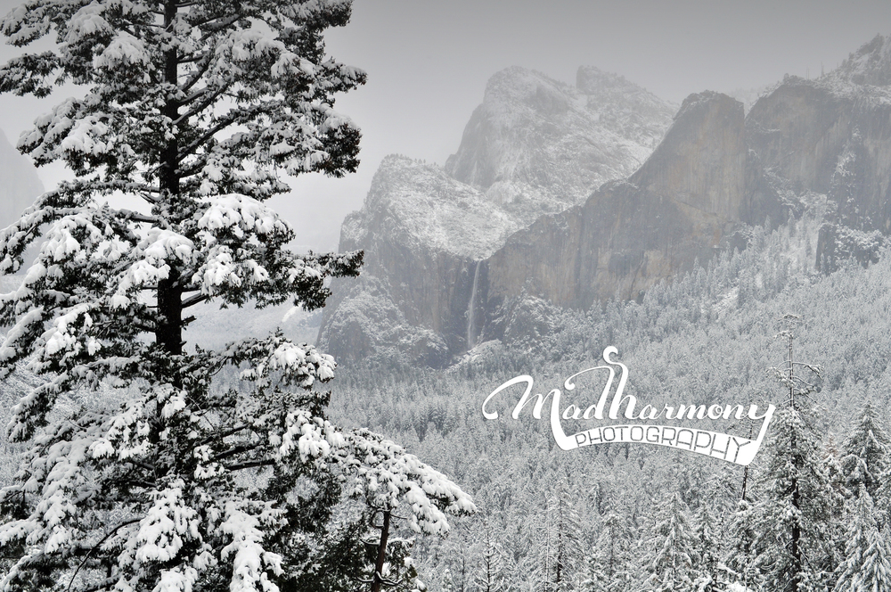 Yosemite National Park / March 2014