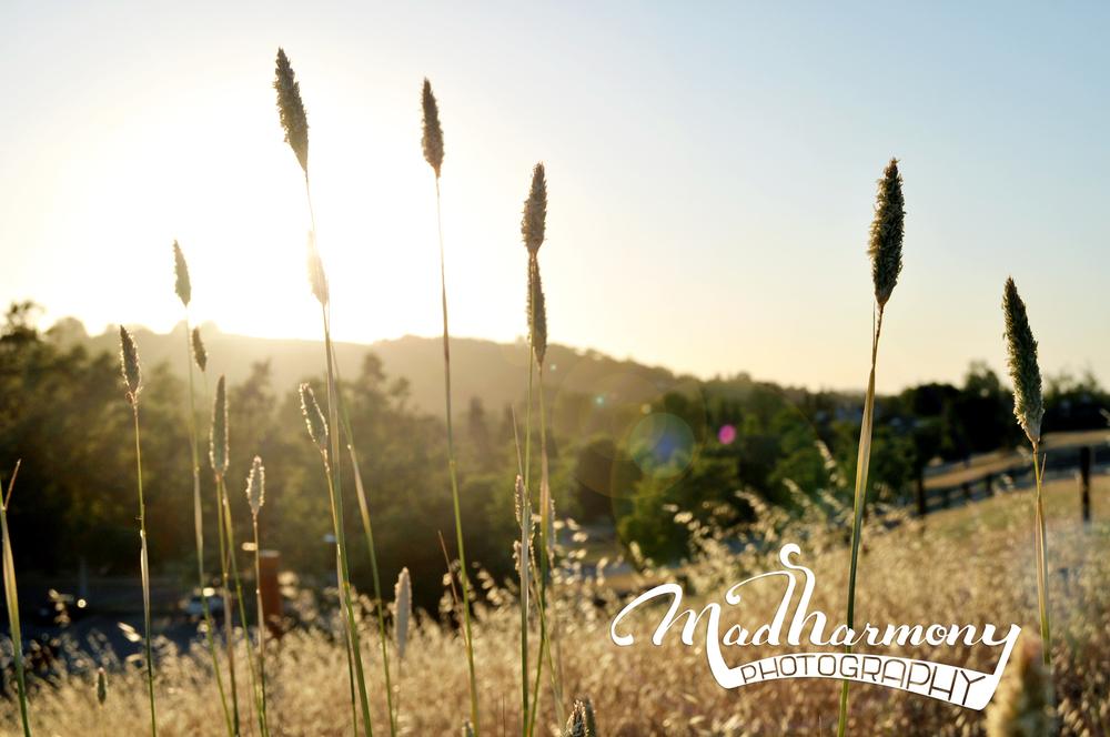 Rancho San Antonio Park, CA / June 2015
