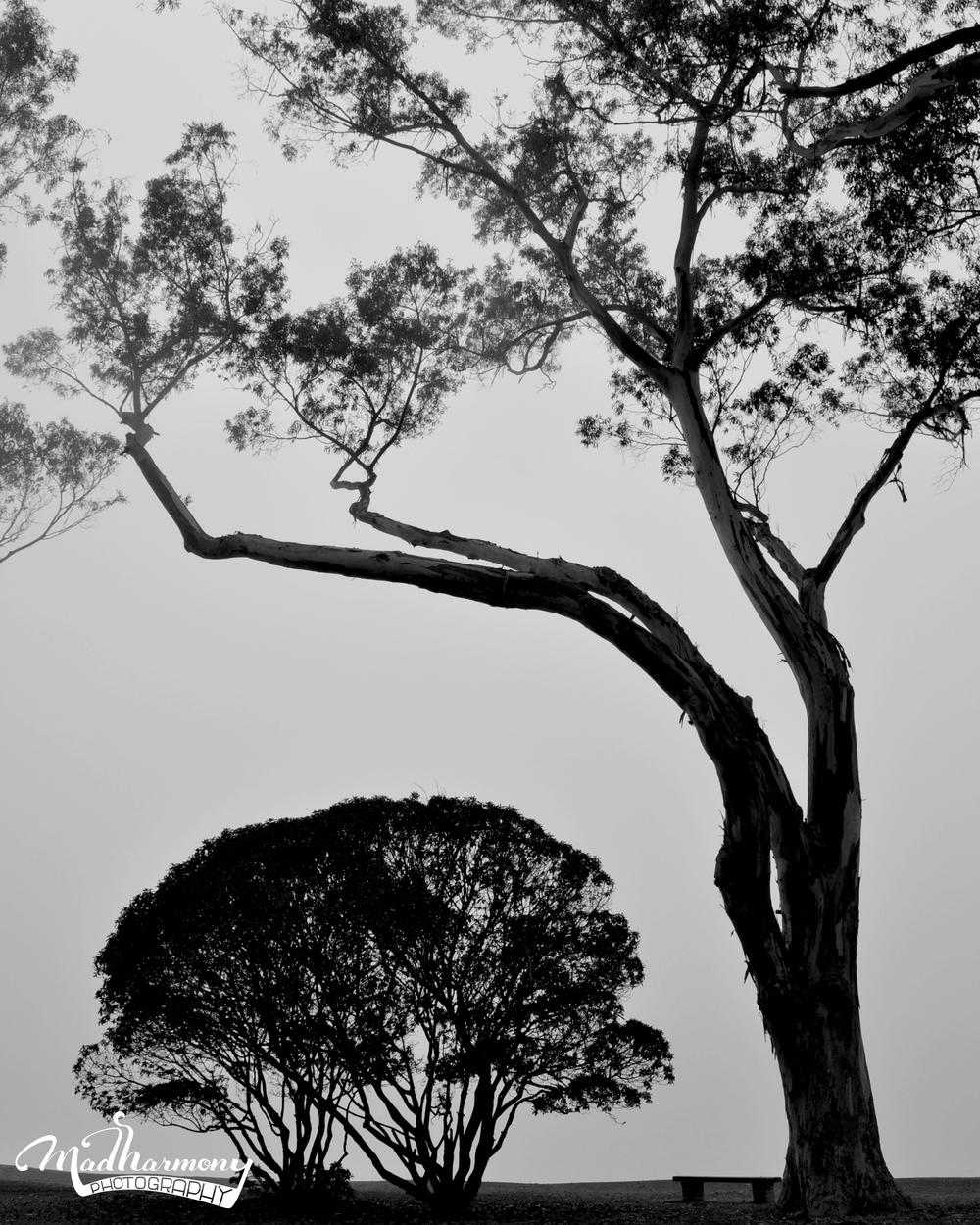 trees_logo.jpg