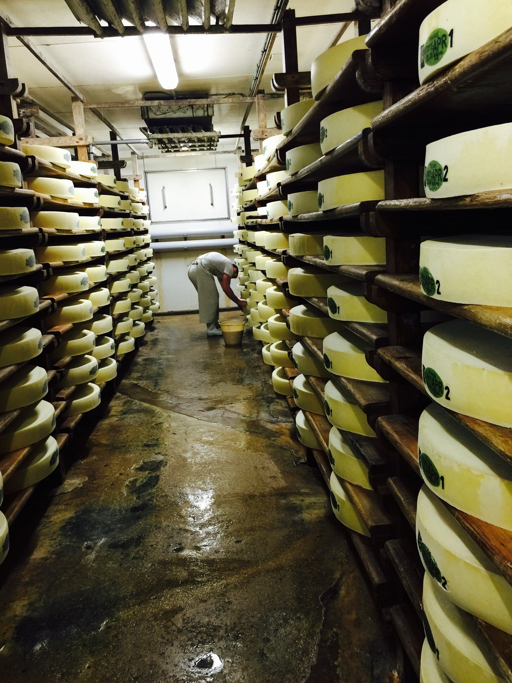 Affineur performing the daily flipping and cleaning of the 80 pound wheels of Comté.