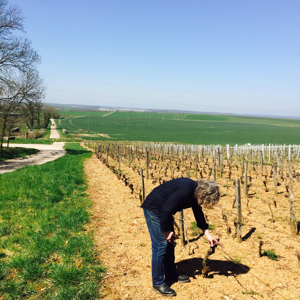 George observing how the vines are trained in this west-facing Jura vineyard.