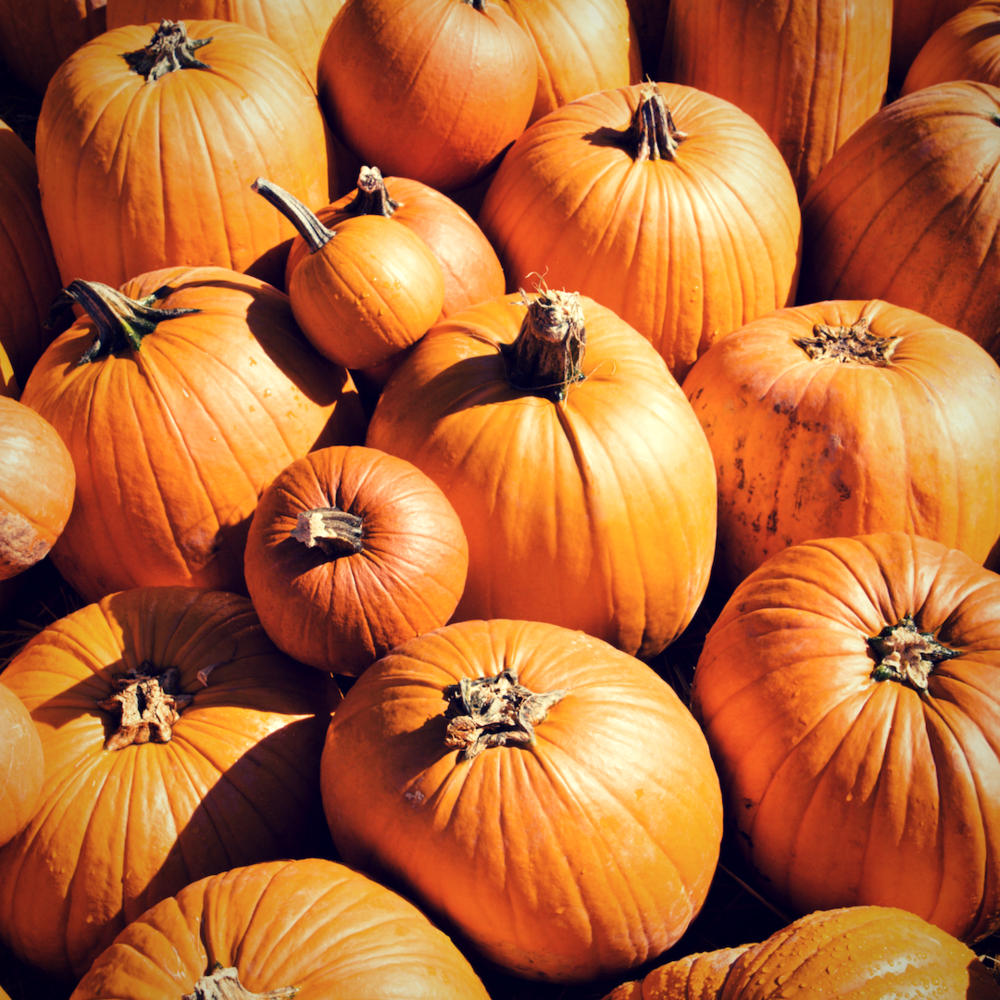 HIT THE PUMPKIN PATCH -