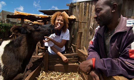 Su Kahumbu, founder of iCow, is licked by a Jersey-Friesian cross