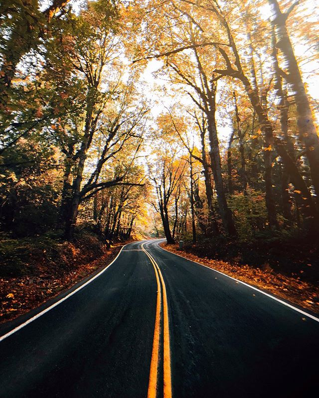 The type of roads I can drive on all day. 🍁