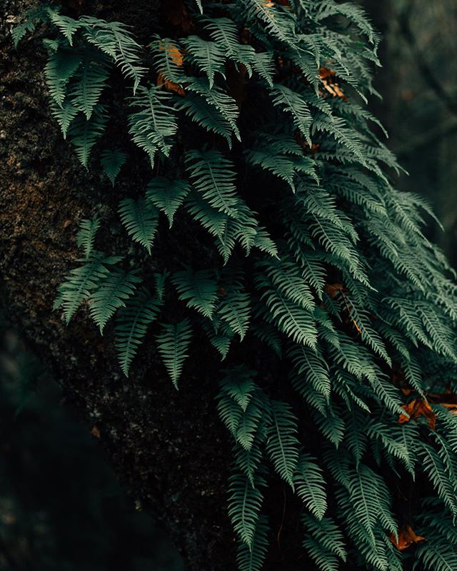 To create something exceptional, your mindset must be relentlessly focused on the smallest detail. 🌿 @experienceoly #decidedlydifferent -  To edit to my style, you can find a link in my bio for presets 🎨