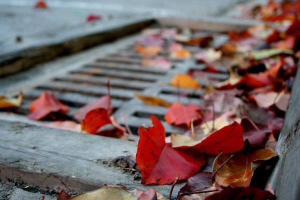 gutter-leaves_2233161713_o.jpg