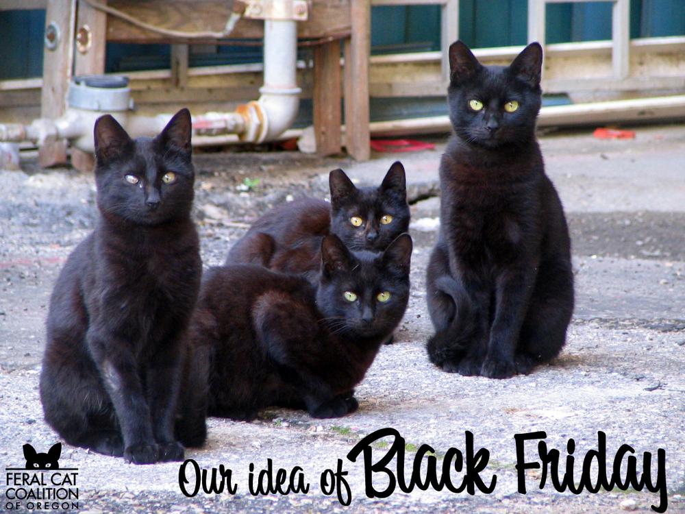 blackcatfriday2015.jpg
