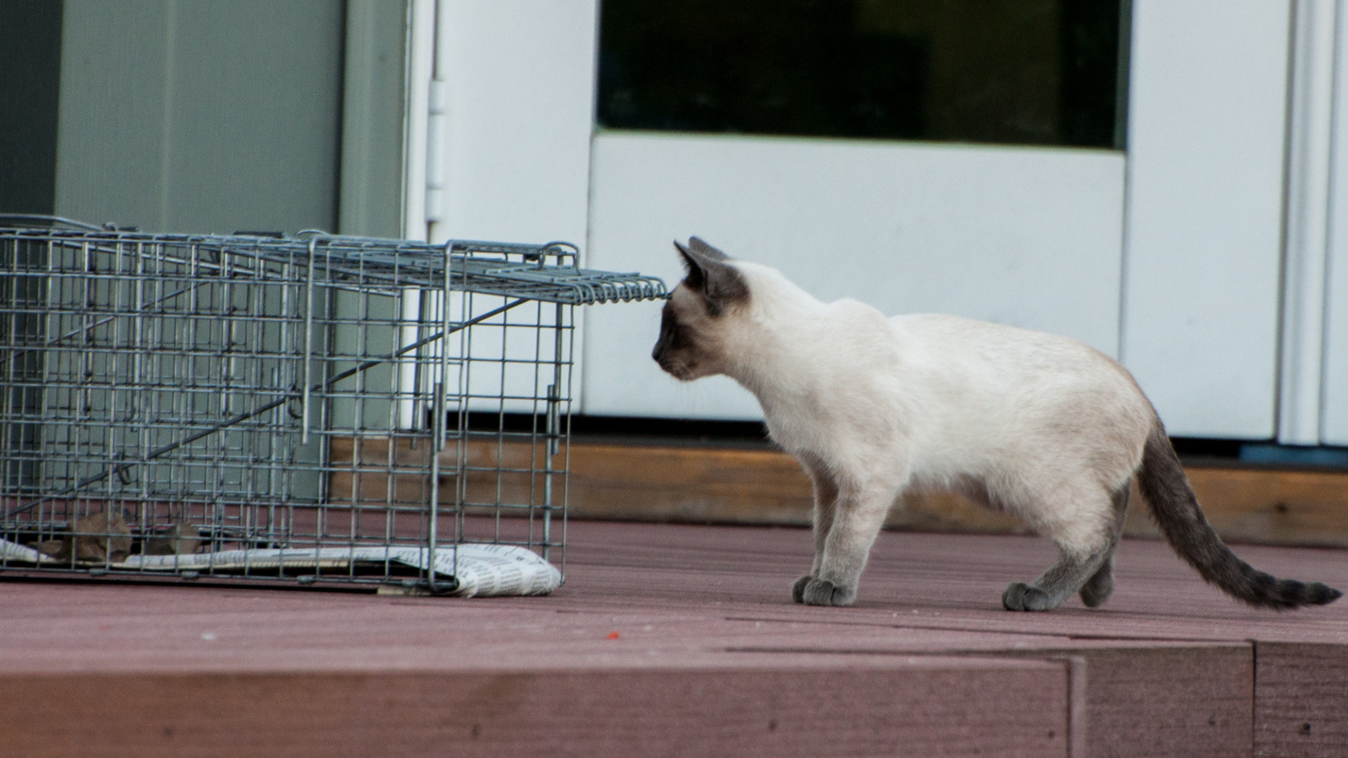 Trapping Instructions — Feral Cat Coalition of Oregon