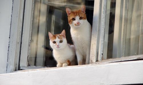 PET CATS -