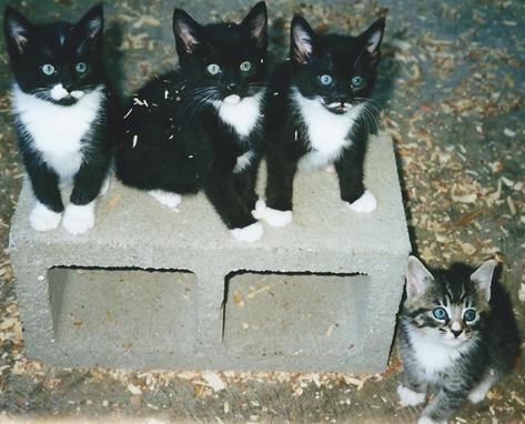 koshkas-kittens.jpg