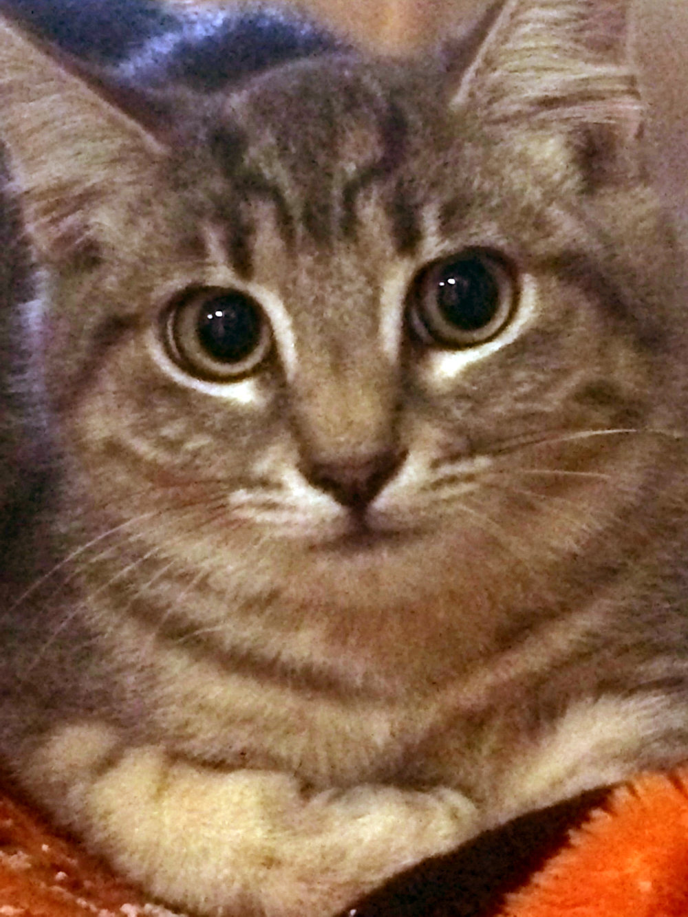 kitten8-17-16.jpg