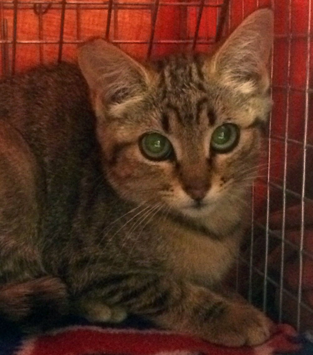 lebanon-cat8-16.jpg